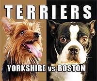Boston Terrier and Torkshire Terrier Graphic