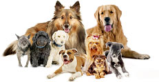 what breed photo collage