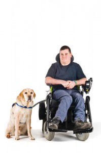 Assistance dogs can help people with mobility limitations.