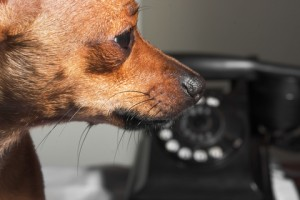 Hearing assistance dogs can be trained to alert someone when a doorbell or telephone rings.