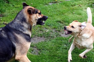The last of the top ten reasons why dogs bite is due to poor training or socialization.