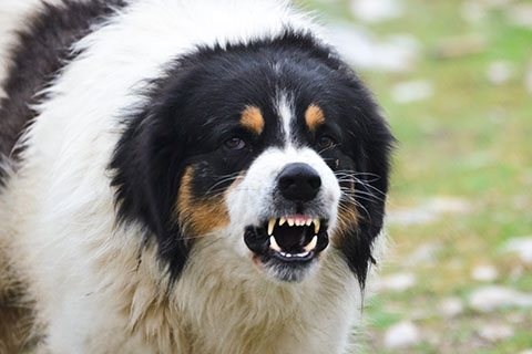 It's hard to blame a dog for biting if the dog is being poked with a ...